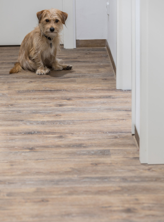 Veterinary practice creates a cosy atmosphere with Altro