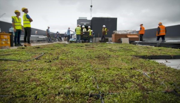 Quick and easy green roof for high-rise London offices