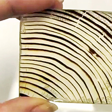 The transparent wood that could replace glass
