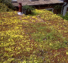 Green roof solution from Wallbarn