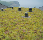 Icopal Launches A New Generation In Green Roofs