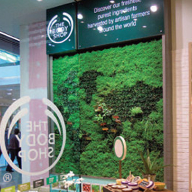 An internal living wall at The Body Shop, Westfield Shopping Centre