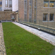 Eco-Roof green roof system used on Guildhall