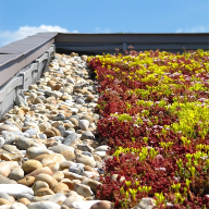 Bailey Eco-Roof green roof for Bolnore Village School