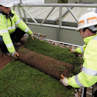 Reasons to specify a green roof