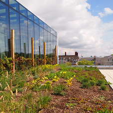 Green roof for Greenwich University