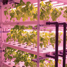 HydroGarden helps University with new research