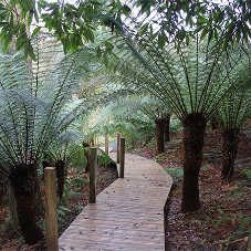 Bespoke decking for The Lost Gardens of Heligan