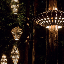 MEDITE SMARTPLY helps light up Redwood Forest