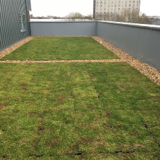 Modern green roof for illustrious house