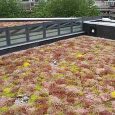 Green roof for Leeds University