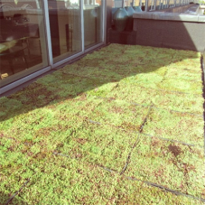 Modular green roof for Mayfair hotel