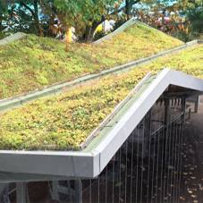 Bauder green roof wins Norfolk Association of Architects Award