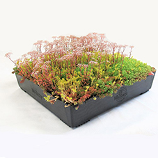 M-Tray® modular green roof system from Wallbarn