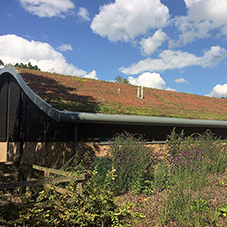 Complete green roof solution for Manor Lodge School