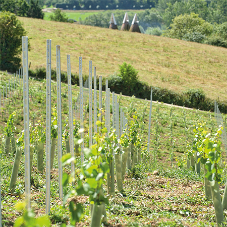 Vineyard specialist supplying trellis supports from Hadley