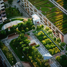 Heatwaves: Can Green Roofs really Cool us down?
