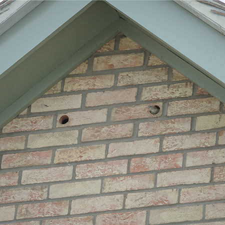 Bird Boxes Limited give birds a home at social housing development