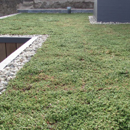 RENOLIT ALKORGREEN Green Roof system provides environmental advantages