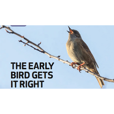 The early bird gets its right [BLOG]