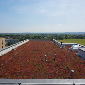 1,500m2 IKO Hot Melt System provides roof for new residents