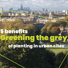 Greening the grey: 5 benefits of planting in urban cities [Blog]