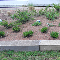 M-Tray®  Modular green roof system