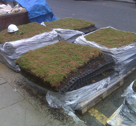 Modular green roof kits supplied stacked on pallets
