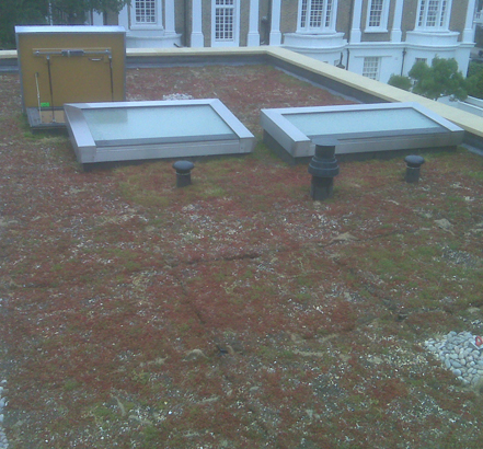 The finished sedum roof installed in one day