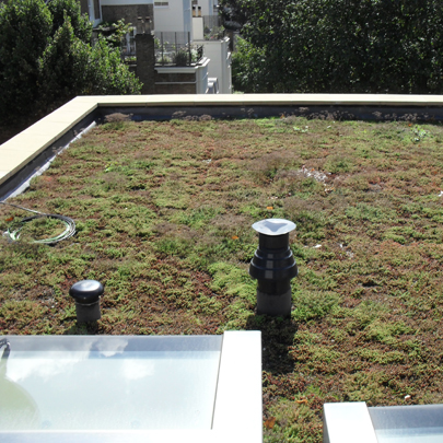 Planted roof systems