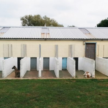 Kennel upgrade for Four Paws Pet Hotel