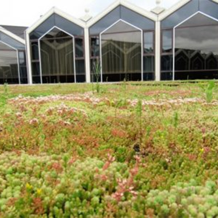 M-Tray® green roof system for Radisson Blu