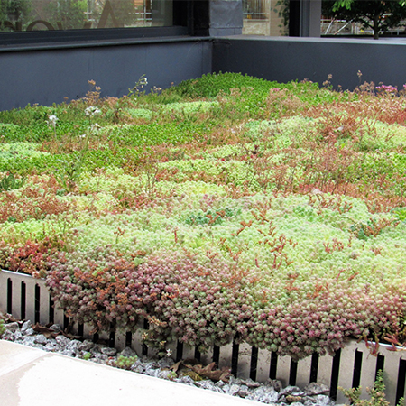 M-Tray® green roof meets deadlines in Wimbledon